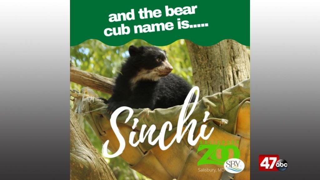1280 Zoo Bear Cub