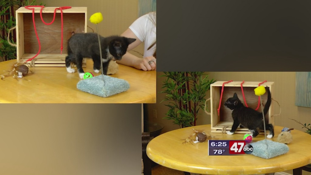 Pets On The Plaza: Meet Glameow And Sneasal