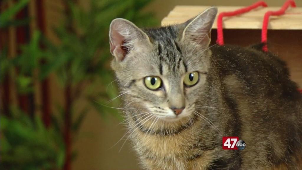 Pets On The Plaza: Meet Mau Mau