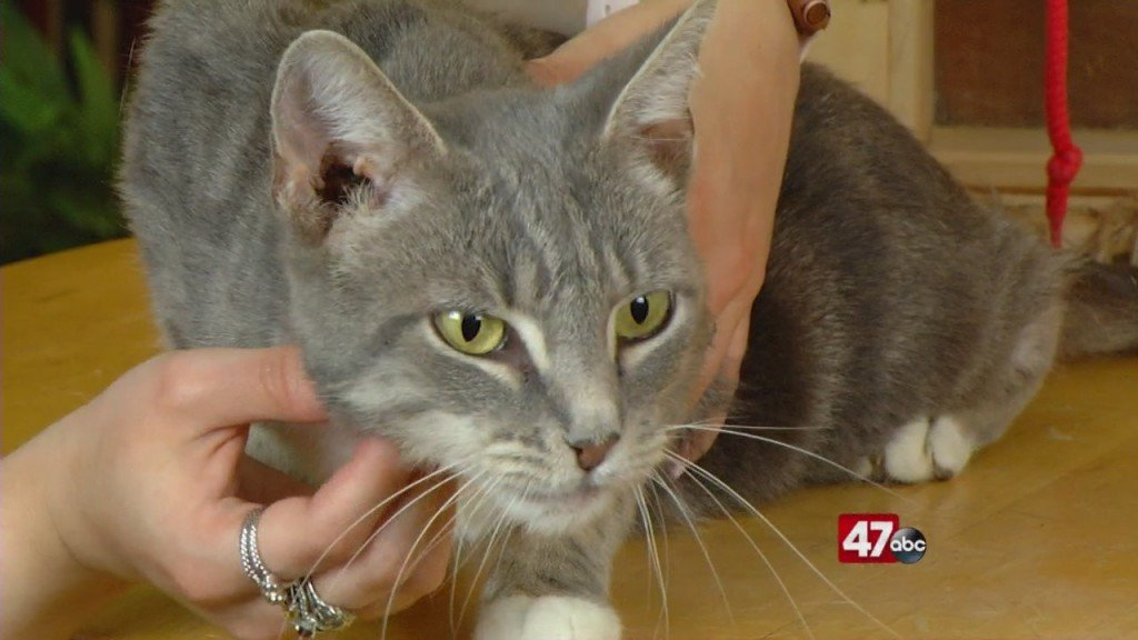 Pets On The Plaza: Meet Lady
