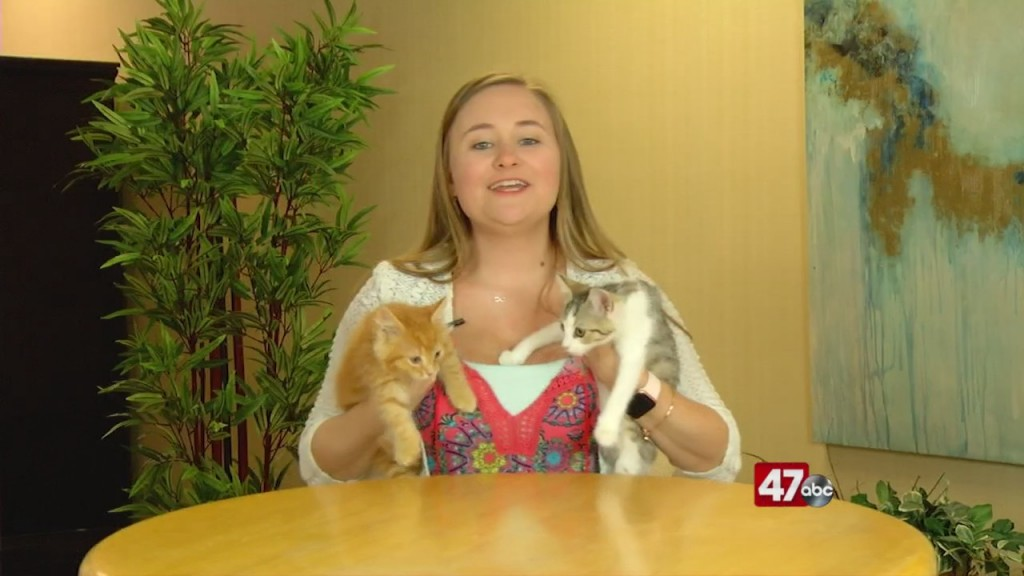 Pets On The Plaza: Meet Fireball And Bethany