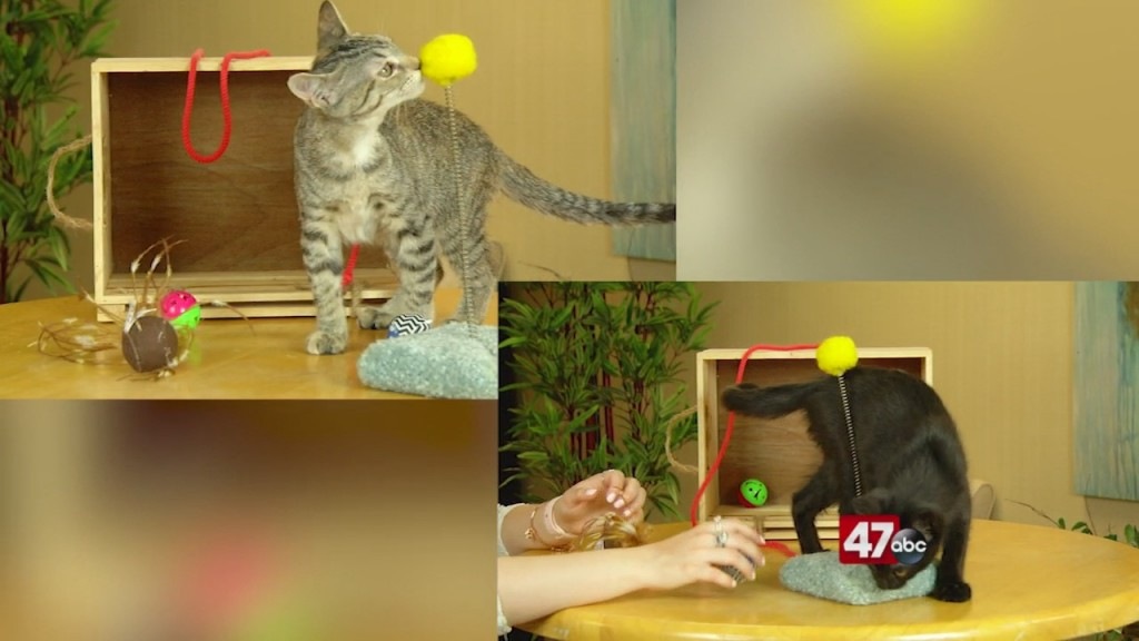 Pets On The Plaza: Meet Tabitha And Salem
