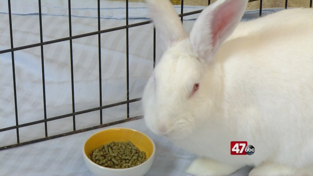 Pets On The Plaza: Meet Aphrodite