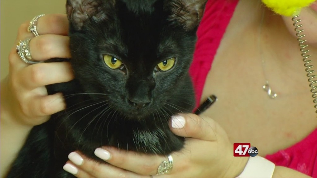 Pets On The Plaza: Meet Luanne