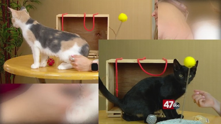Pets On The Plaza: Meet Edge And Arabesque