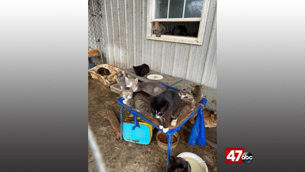 1280 Animal Neglect