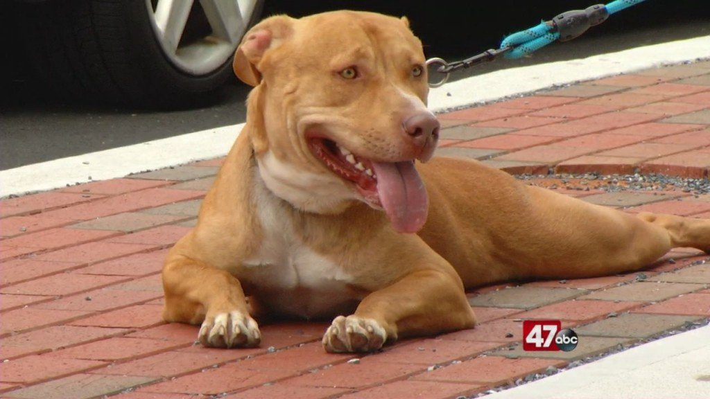 Pets On The Plaza: Meet Hank