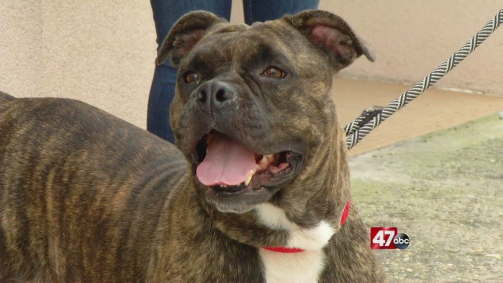 Pets On The Plaza: Meet Eleanor