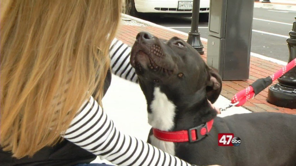 Pets On The Plaza: Meet Shiloh