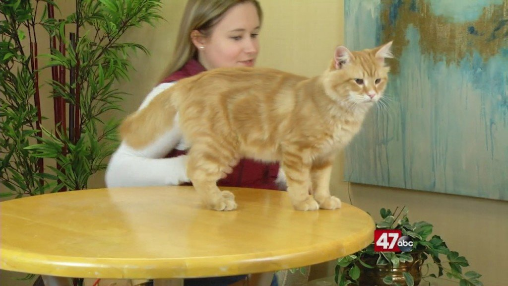Pets On The Plaza: Meet Elmo