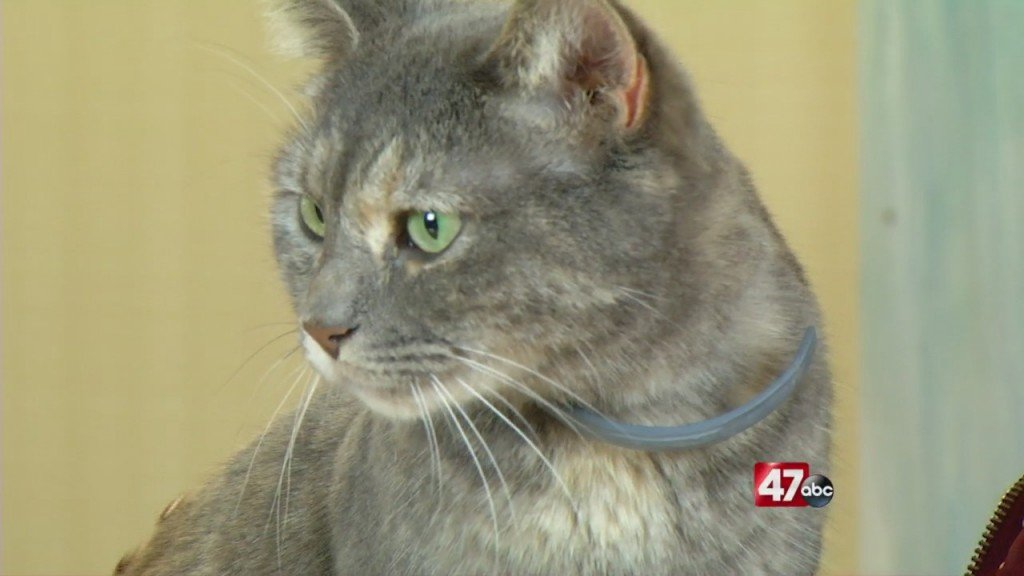 Pets On The Plaza: Meet Alley