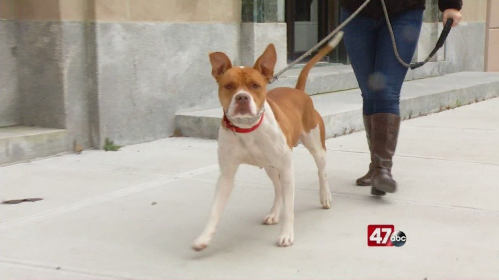 Pets On The Plaza: Meet Cardi