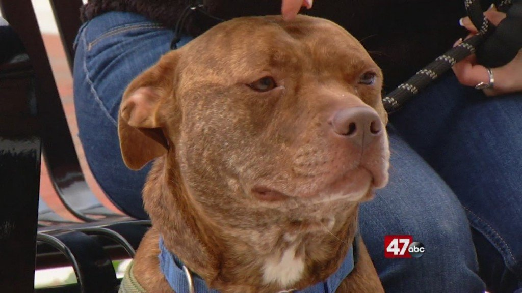 Pets On The Plaza: Meet Bali