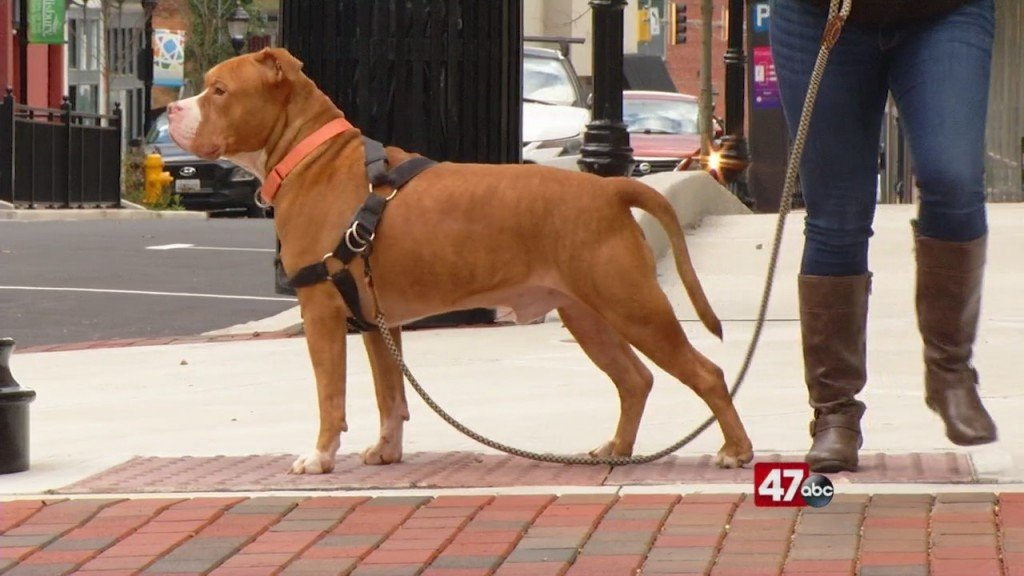 Pets On The Plaza: Meet Bullwinkle