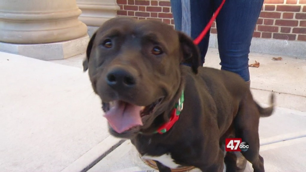 Pets On The Plaza: Meet Bigbee