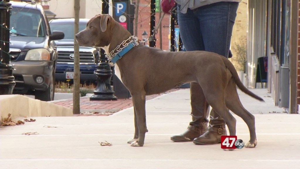 Pets On The Plaza: Meet Bella