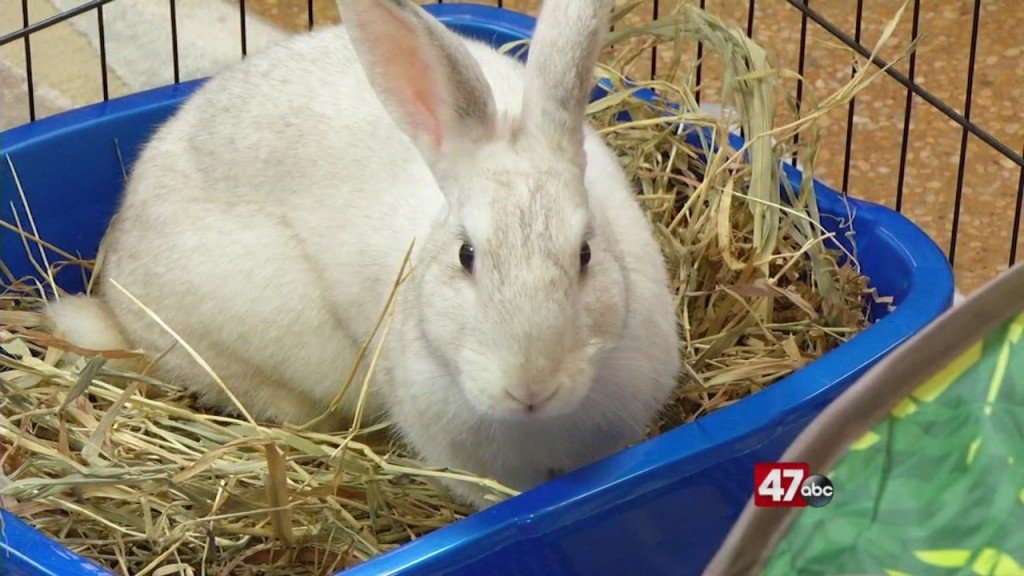 Pets On The Plaza: Meet Delilah