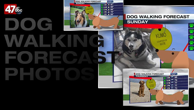 Dogwalking Image Nobg Copy