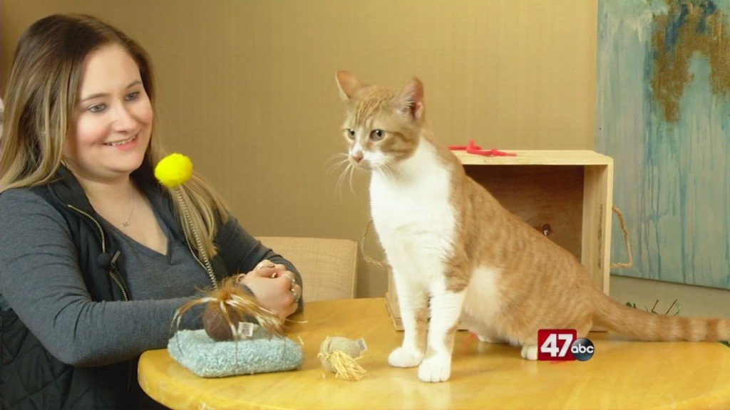 Pets On The Plaza: Meet Gilman