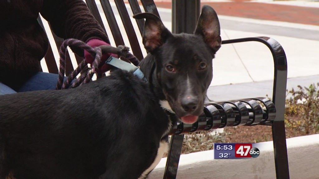Pets On The Plaza: Meet Sirius