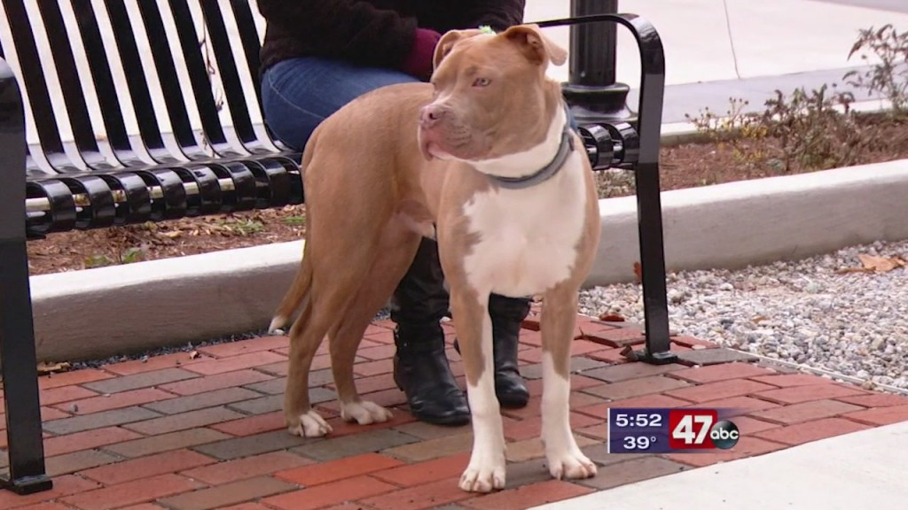 Pets On The Plaza: Meet Detroit