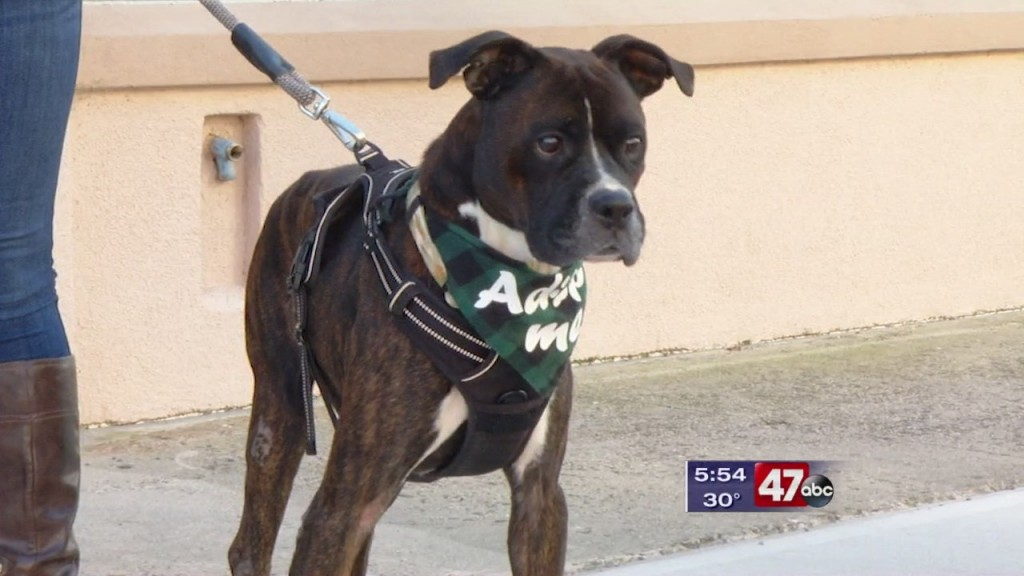 Pets On The Plaza: Meet Russell