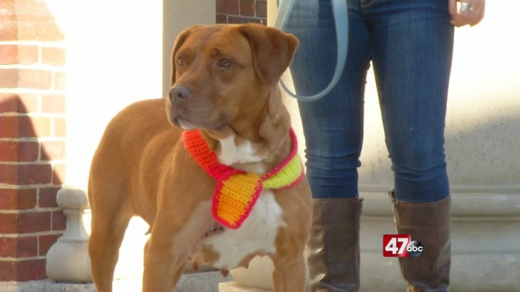 Pets On The Plaza: Meet Birdie