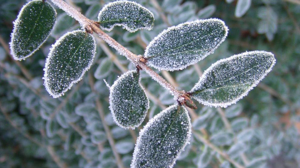 Frost Natgeoorg