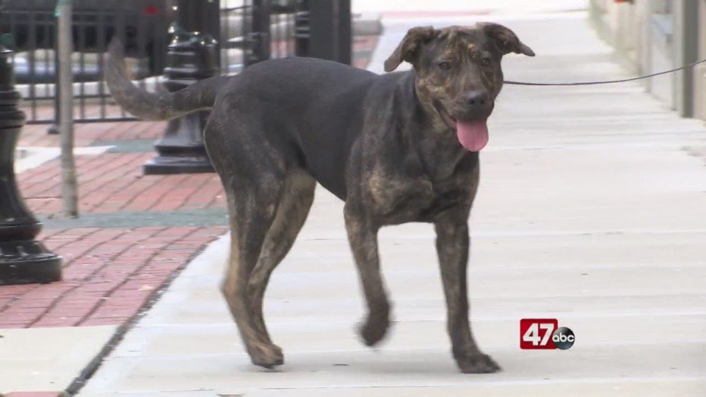 Pets On The Plaza: Meet Ferdie