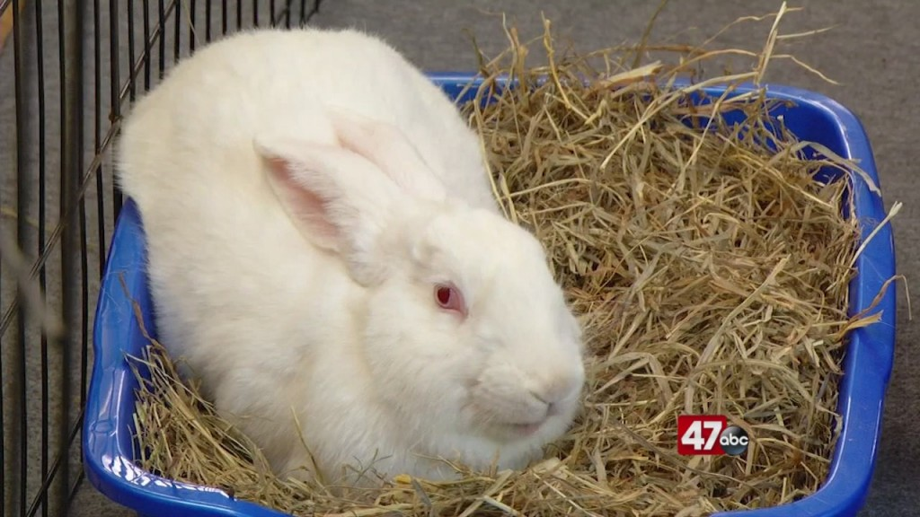 Pets On The Plaza: Meet Juniper