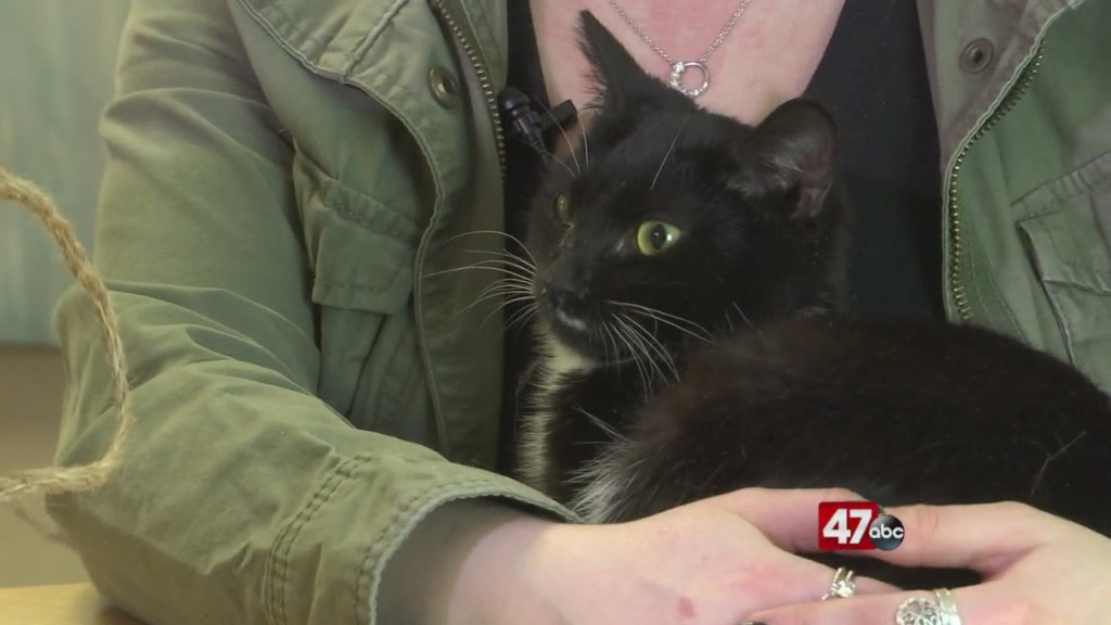 Pets On The Plaza: Meet Lilly