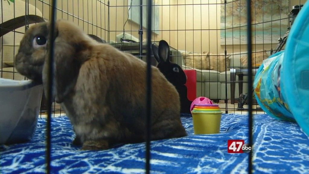 Pets On The Plaza: Meet Marshmellow And Nutters