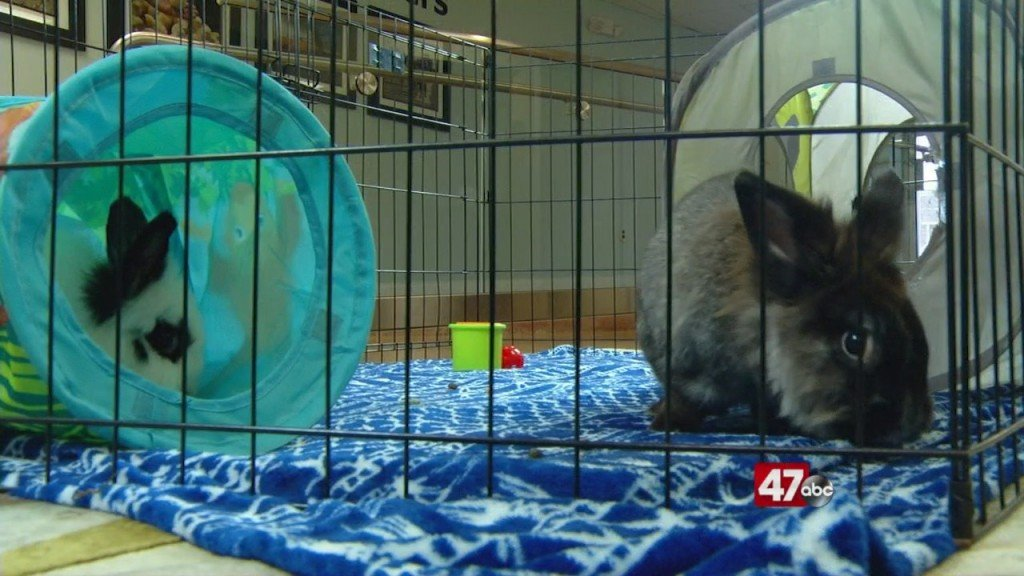 Pets On The Plaza: Meet Ollie And Hurley