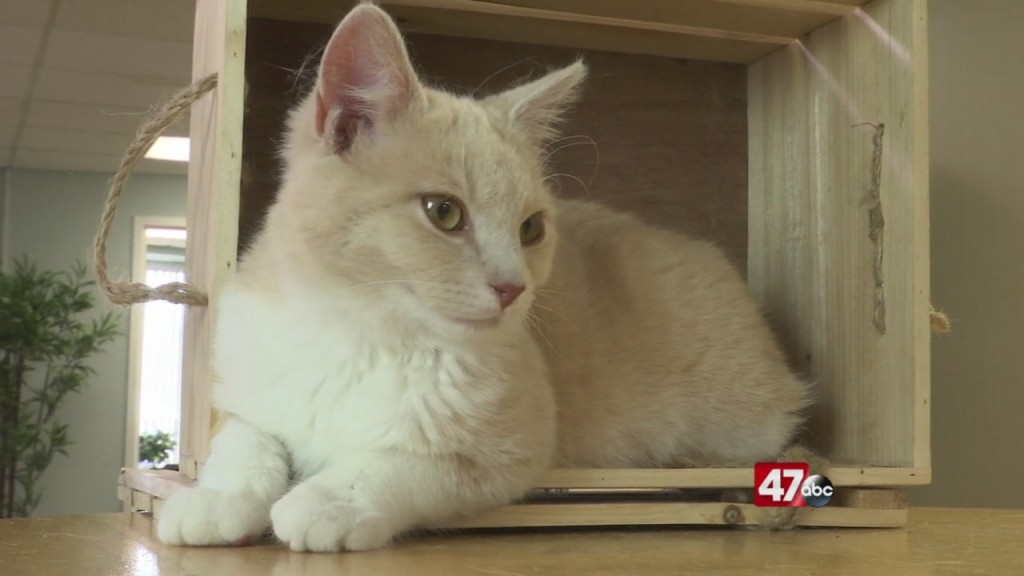 Pets On The Plaza: Meet Cirrus