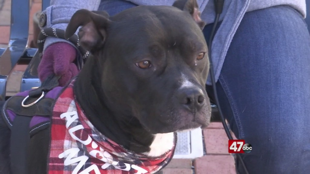 Pets On The Plaza: Meet Buckley
