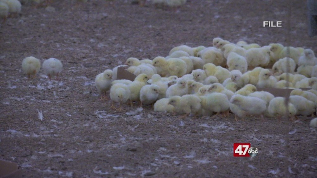 Court Decision On Poultry Pollutants
