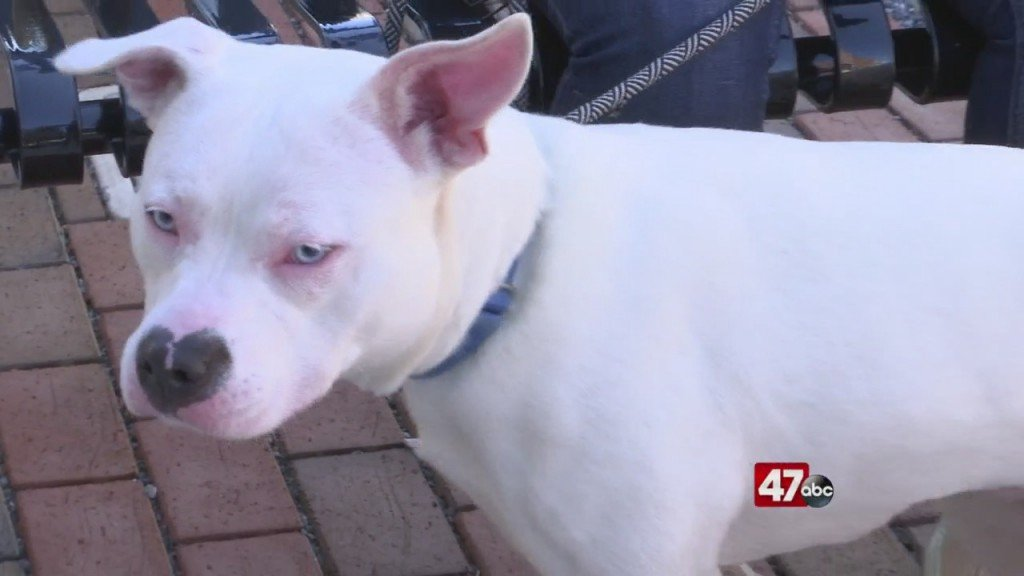Pets On The Plaza: Meet Alba