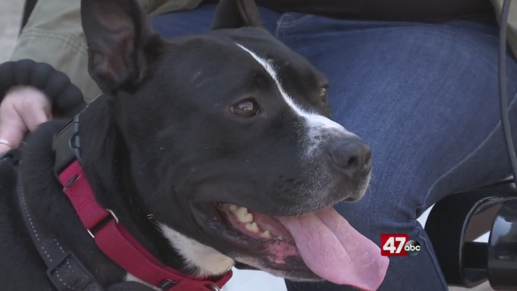 Pets On The Plaza: Meet Kosher