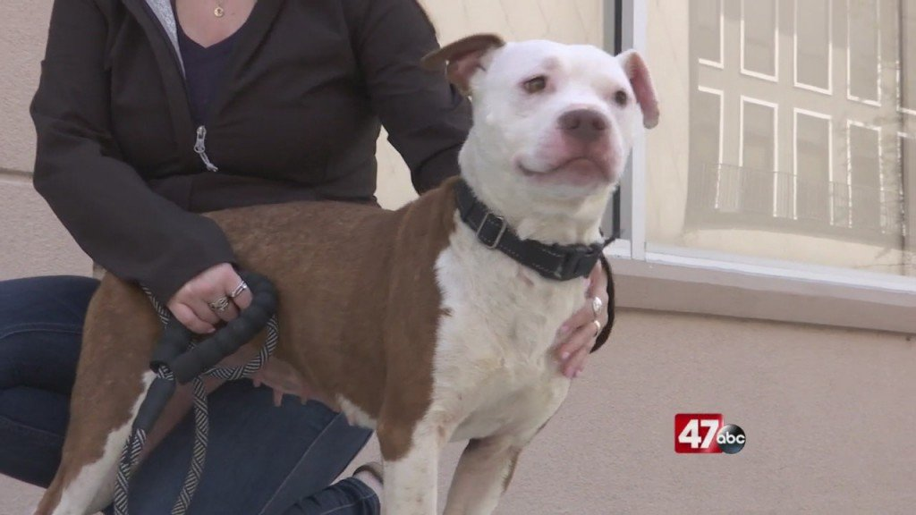 Pets On The Plaza: Meet Kendra
