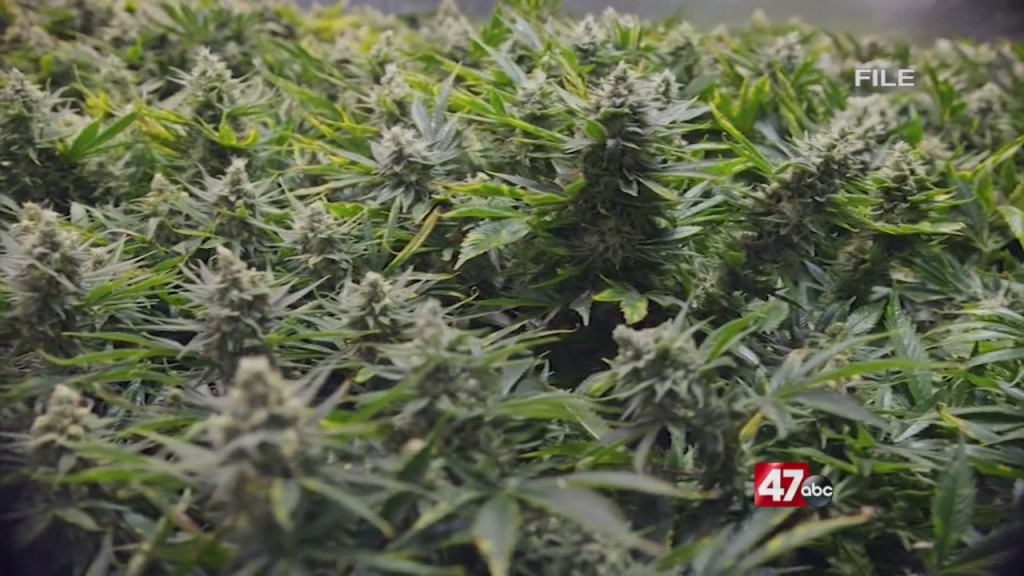 Push For Cannabis In Next Session