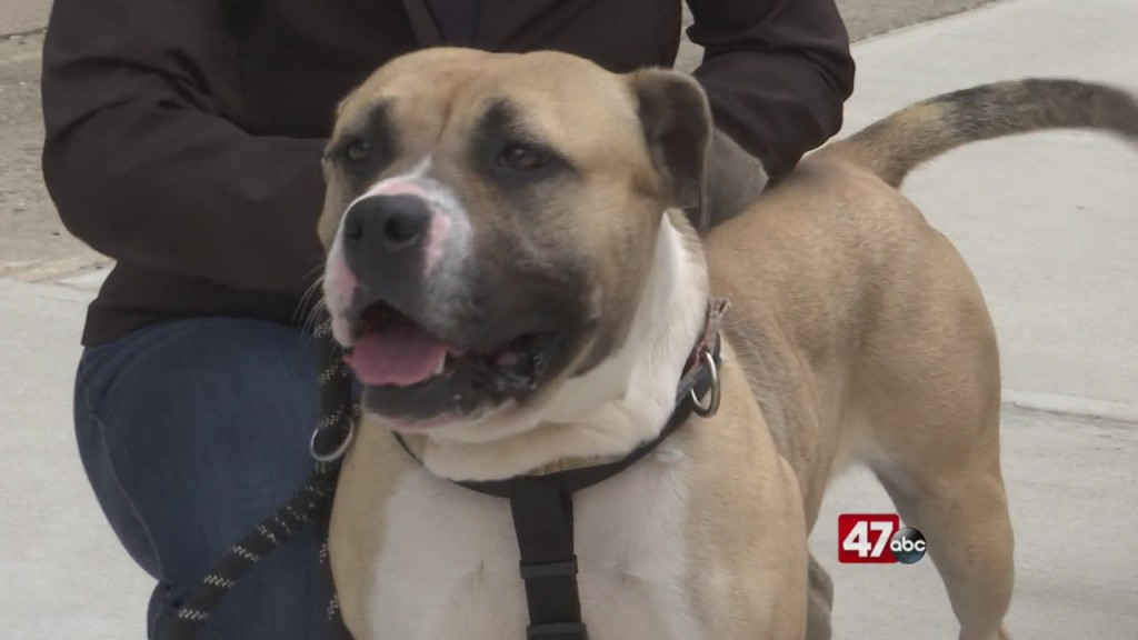 Pets On The Plaza: Meet Marge