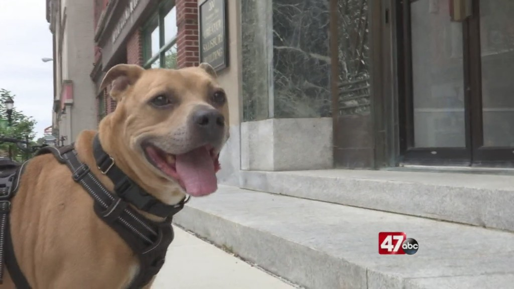 Pets On The Plaza: Meet Marty