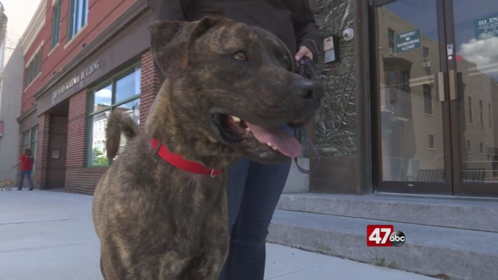 Pets On The Plaza: Meet Andy Ammo
