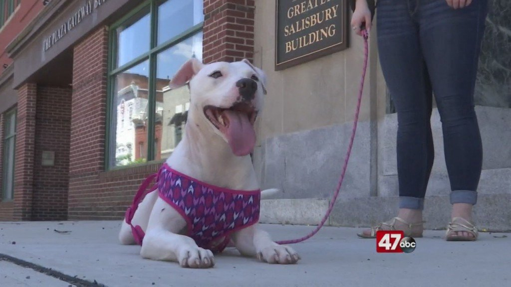 Pets On The Plaza: Meet Cherokee