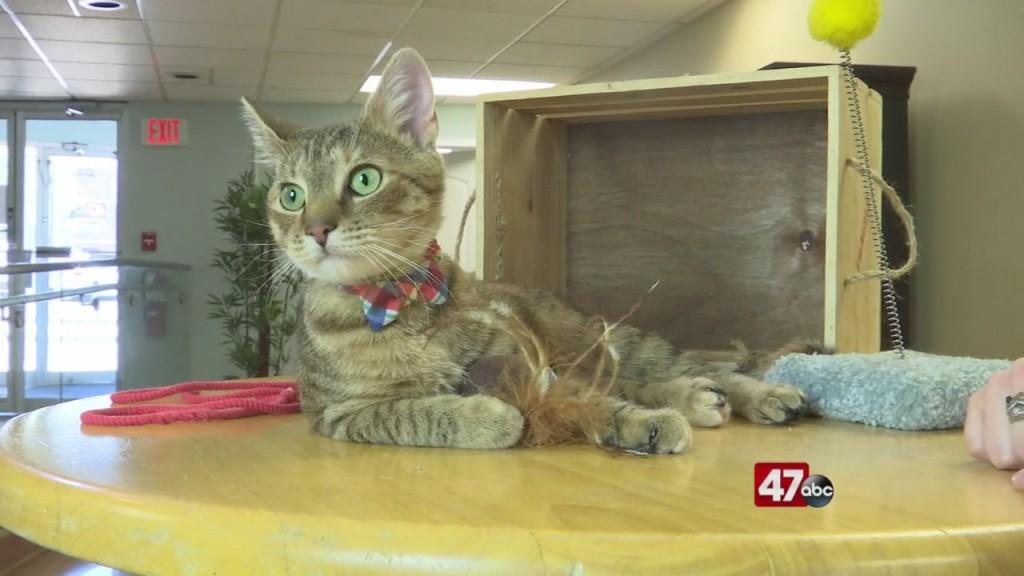 Pets On The Plaza: Meet Misty