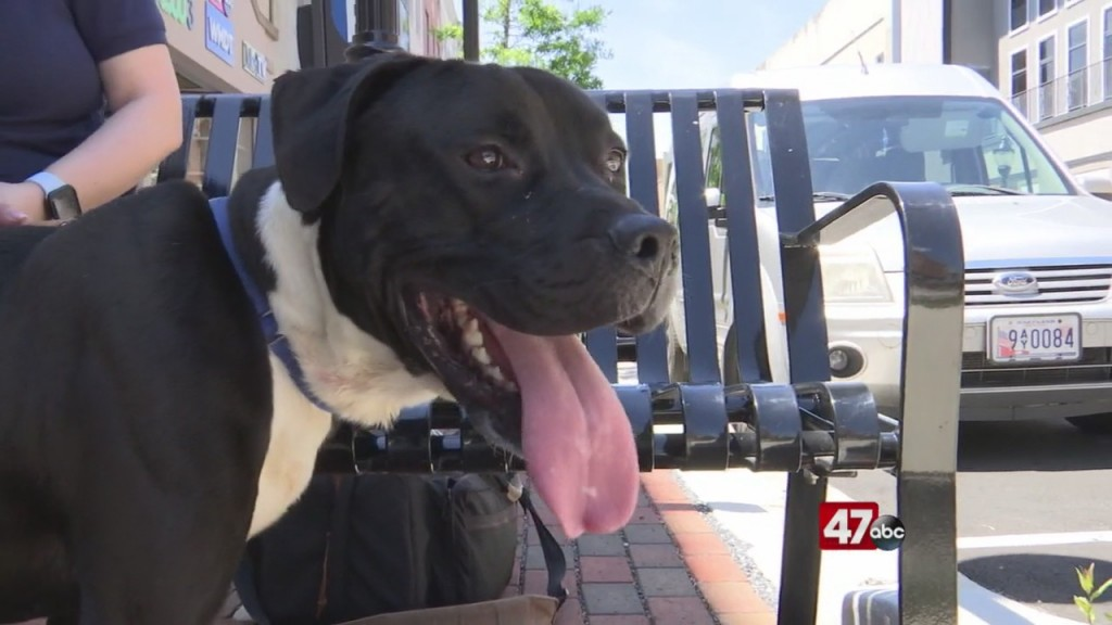 Pets On The Plaza: Meet Jet