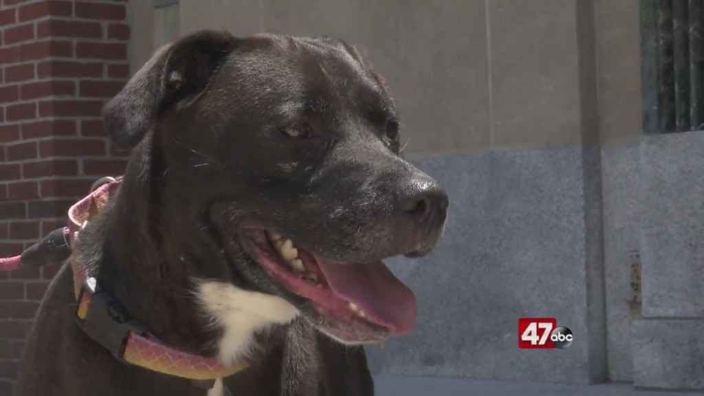 Pets On The Plaza: Meet Sophie