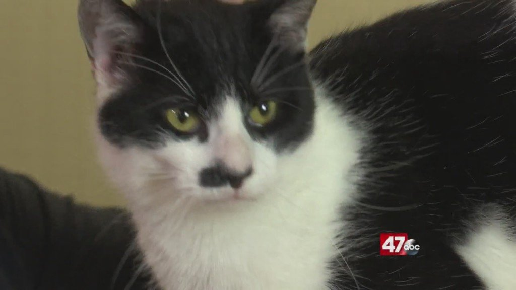 Pets On The Plaza: Meet Wolfgang