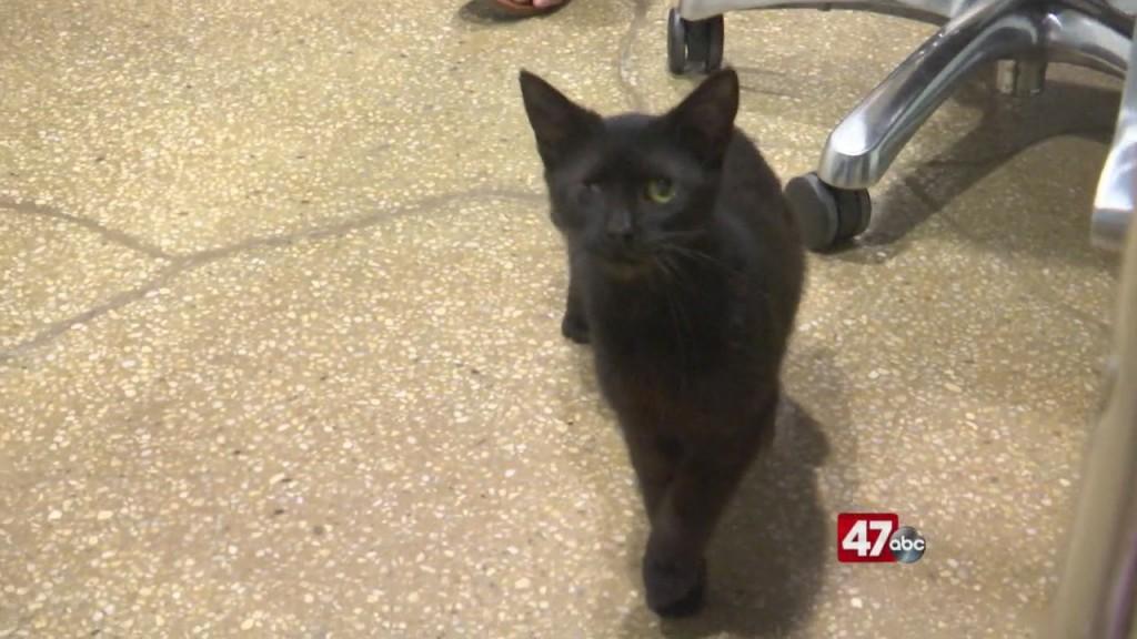 Pets On The Plaza: Meet Bojangles