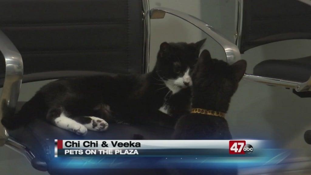 Pets On The Plaza: Meet Chi Chi And Veeka